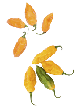 theme-peppers-8.png